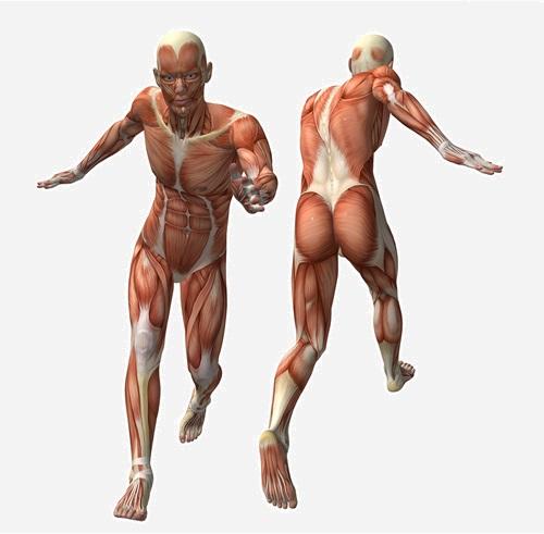 איך לחץ משפיע על הגוף שלכם? (צילום: Shutterstock)