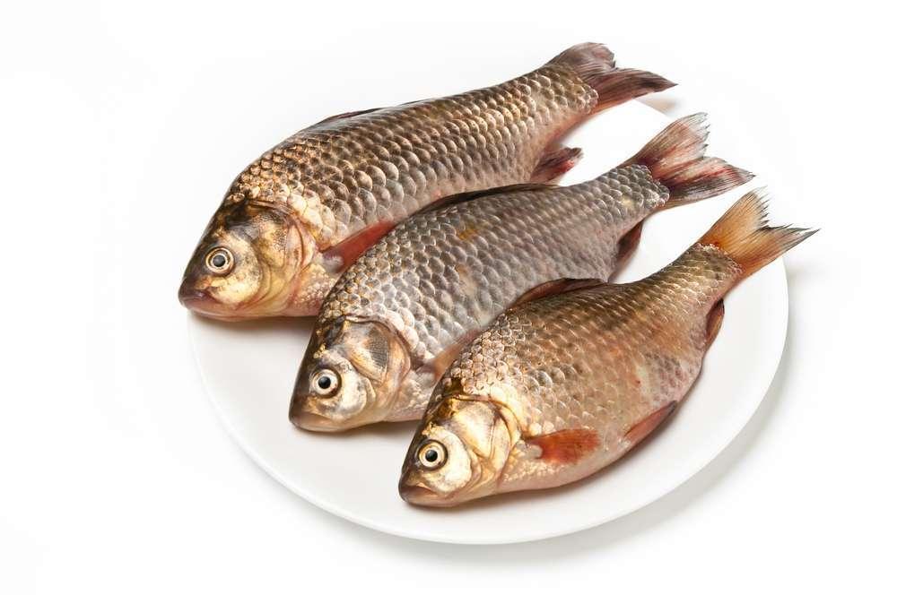 תוצאת תמונה עבור ראש של דג